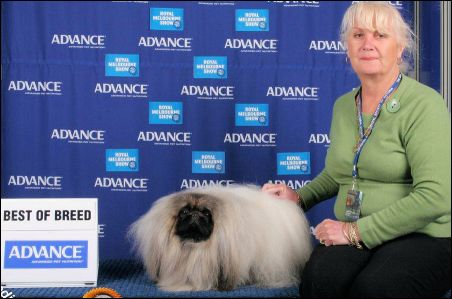 "AUSTRALIAN GRAND CHAMPION CHINDARA MIRRORS IMAGE - ""Image""  - Best of Breed Melbourne Royal"